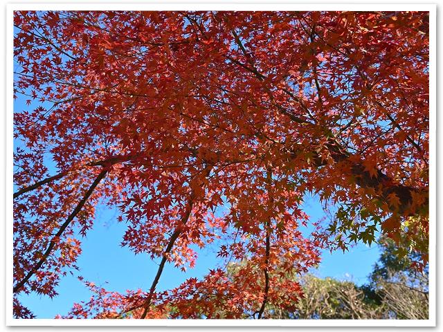 散歩☆昭島エコパーク