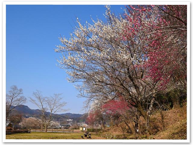 散歩☆小峰公園