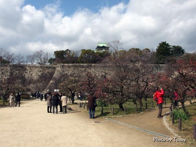 大阪城天守閣と梅林