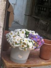 ハバナの花