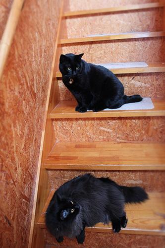 てんちゃとフェブ階段