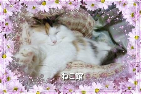 blog10_20160308105133e16.jpg