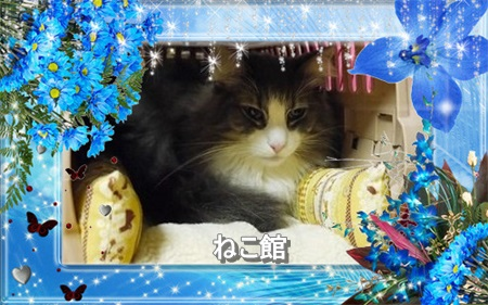 blog12_20160308105136768.jpg