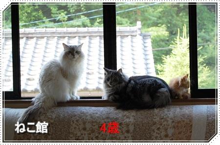 blog14_20160225133541b6d.jpg