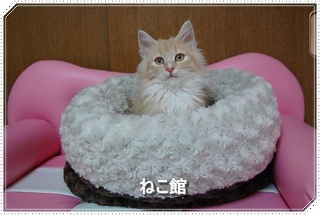 blog1_201601191445181b5.jpg
