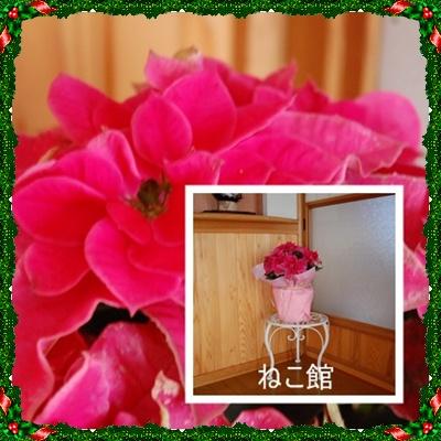 blog2_20151225122417e5b.jpg