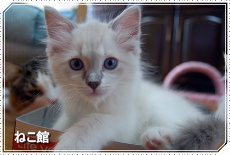 blog4_20160225133440f46.jpg