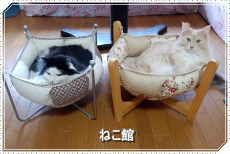 blog8_20160311111845f08.jpg