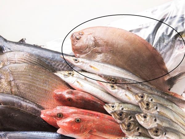 超速鮮魚ボックス囲み円あり0114