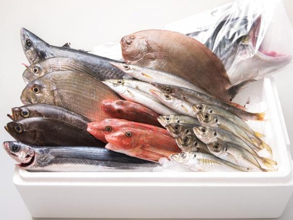 超速鮮魚ボックス0114
