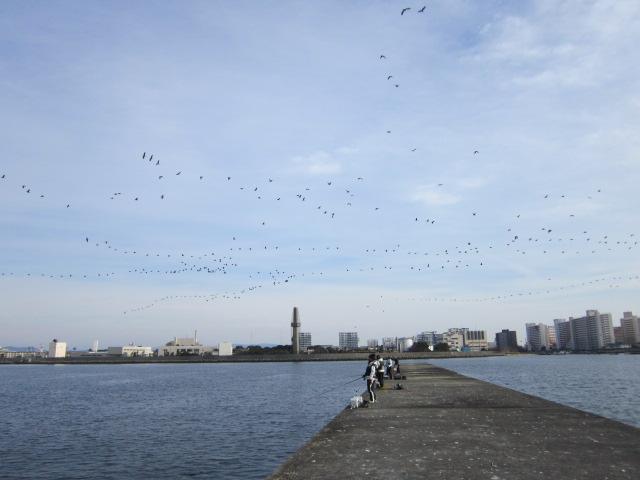 鳥よ~♪ 鳥よ~♪ 鳥たちよ~♪