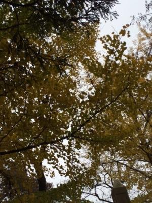 みたけやまの樹