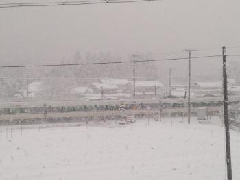 20160125雪降り