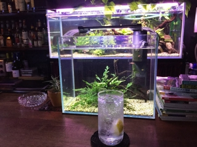 160118近藤熱帯魚店ウォッカリッキー