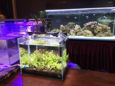 160118近藤熱帯魚店熱帯魚たち