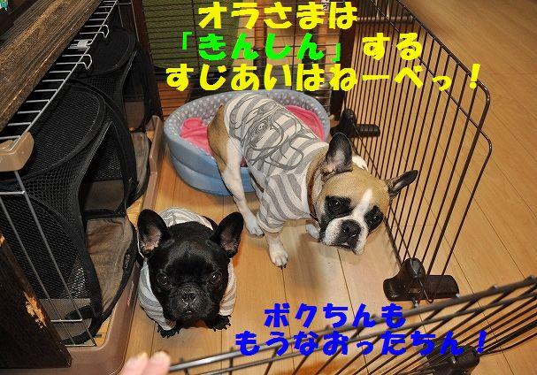 DSC_0003_20151216150132a3e.jpg