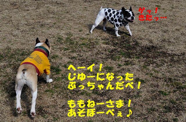 DSC_0005_2016030811313592a.jpg
