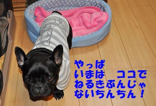 DSC_0037_2015121810105154b.jpg