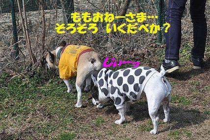 DSC_0051_20160308083134cba.jpg
