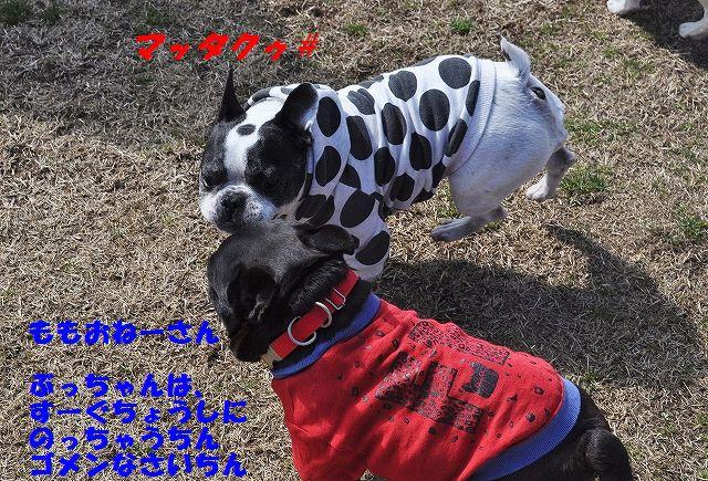 DSC_0053_20160308133008ce9.jpg