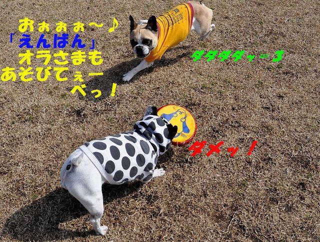 DSC_0058_20160308113138e78.jpg