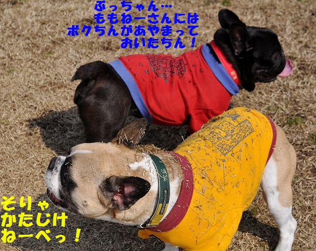DSC_0077_201603081447221d1.jpg