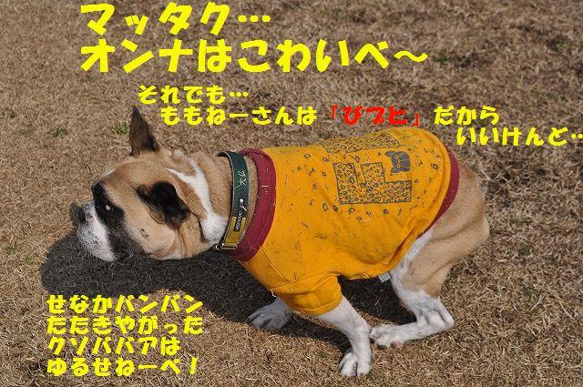 DSC_0078_2016030817115240b.jpg