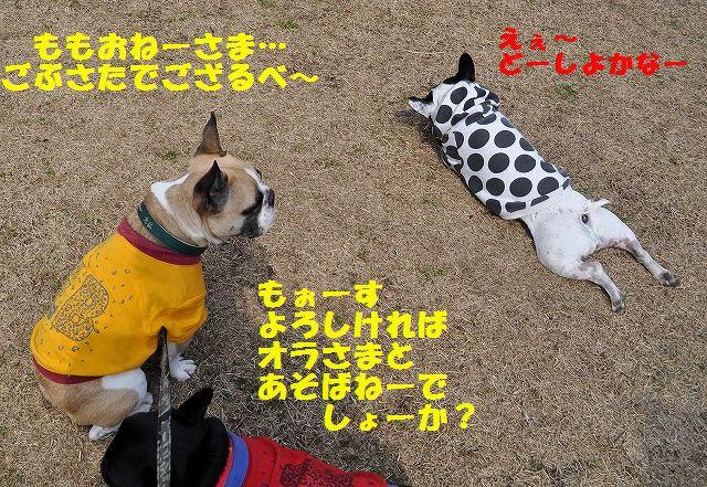 DSC_0131_201603081131392e1.jpg