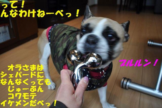 DSC_0143_2015122809135539a.jpg