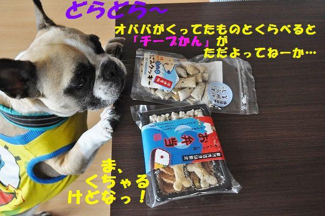 DSC_0237_2016031014560110d.jpg