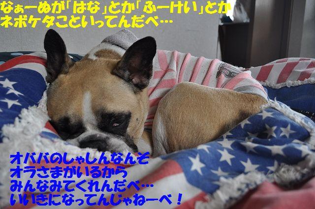 DSC_0240_2016030214333211f.jpg