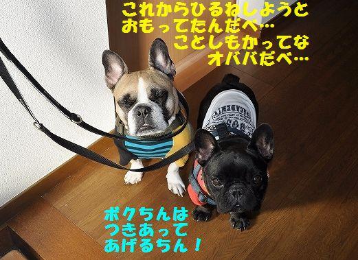 DSC_0264_20160106153304897.jpg