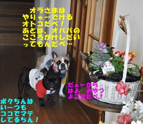 DSC_0298_20160107104630a6c.jpg