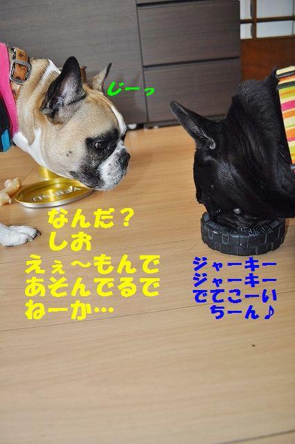 DSC_0328_20160114143133c42.jpg
