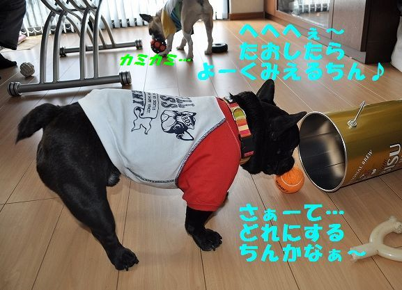DSC_0354_20160113153252895.jpg