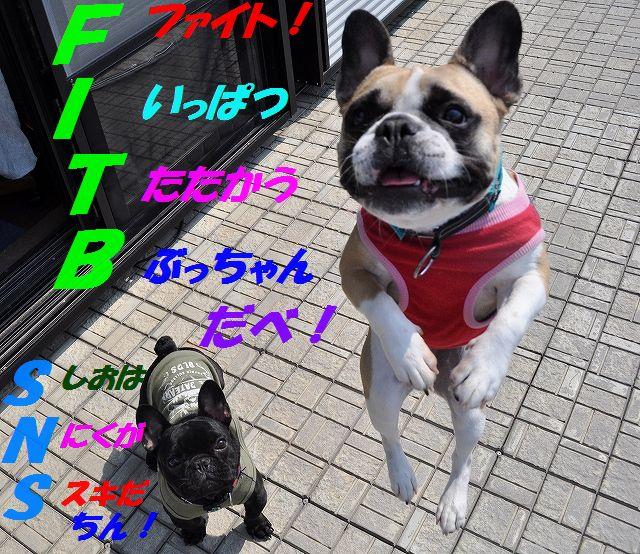 FITB_201603021351359f8.jpg