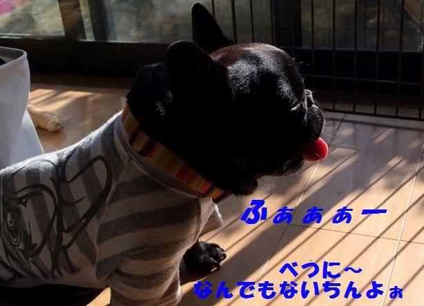 IMG_1979_20151218101113877.jpg