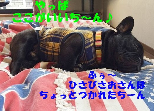 IMG_2079_20151222104247bd2.jpg