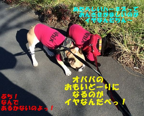 IMG_2127.jpg