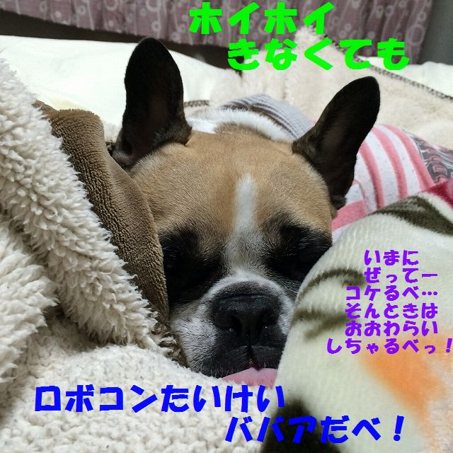 IMG_3012_20151214153127032.jpg