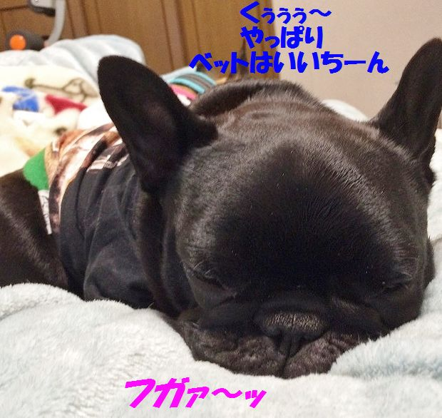 IMG_3231_201602261456389bd.jpg