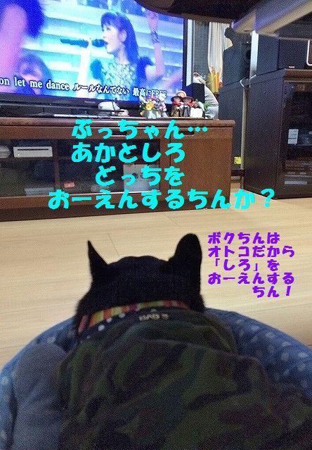 IMG_3501_201601071504310f9.jpg