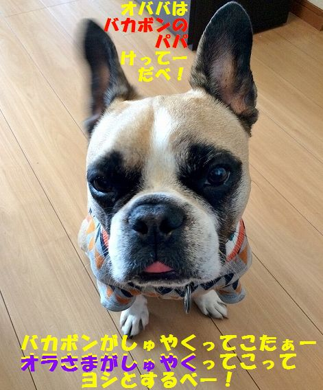 IMG_6261_20160311140639728.jpg