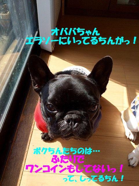 IMG_7928.jpg