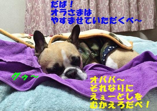 IMG_8440_201601071617203e7.jpg