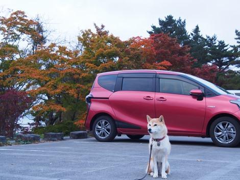 新車とさくらと紅葉
