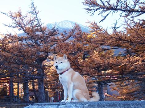 富士山とさくら♪