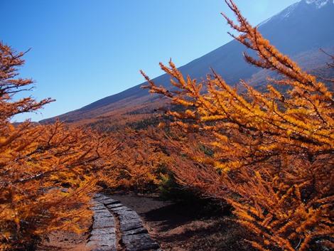 富士山と紅葉