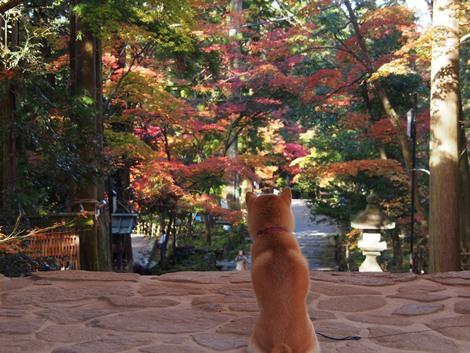 紅葉を眺める♪
