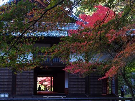 紅葉のお茶室